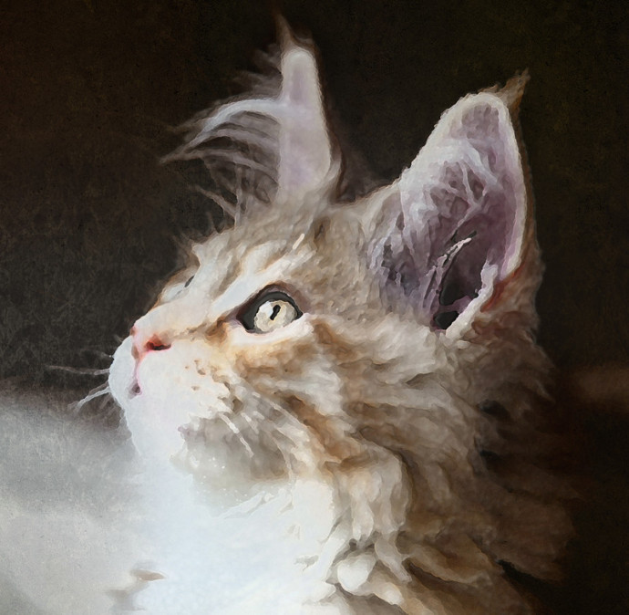 cameo tabby maine coon painting