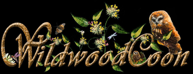 WILDWOODCOON NEW OWL BUTTON